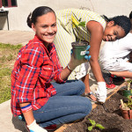 Garden Delights Program